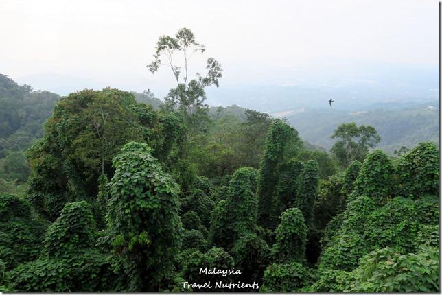 馬來西亞沙巴 九如河泛舟 溜索 (105)