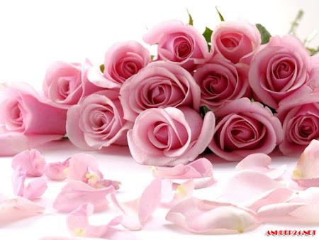 Tải miễn phí 10 hình hoa hồng đẹp độc lạ