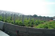 Aduh.... Banyak Rumput Liar, Pembangunan Pasar Cilamaya Mangkrak 4 Bulan
