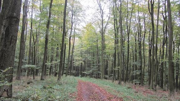 Lemgoer Mark – Wanderung am 02. November