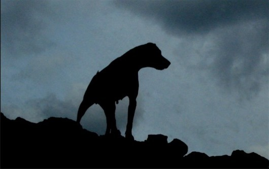 The-Hound-of-Baskerville_1-620x389
