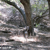 malibu_creek_state_park_img_0805.jpg