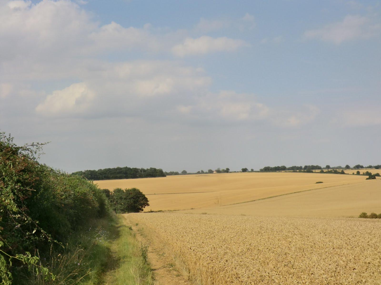 CIMG6062 Essex farmland