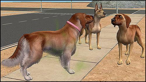 Dog1Resize