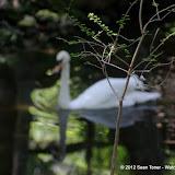 04-07-12 Homosassa Springs State Park - IMGP4561.JPG