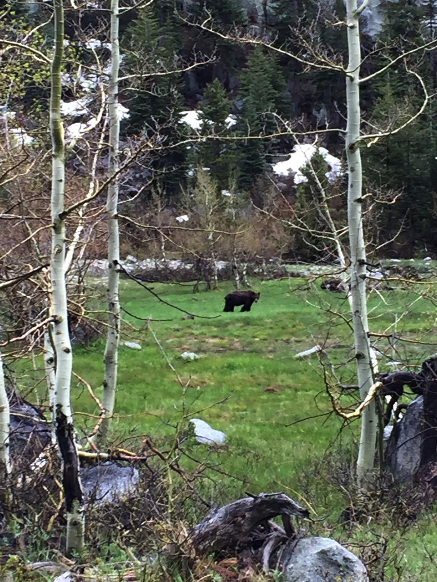 Close to the Big Fucking Bear May 2016.jpg