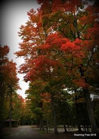 Fall Colors - week 1