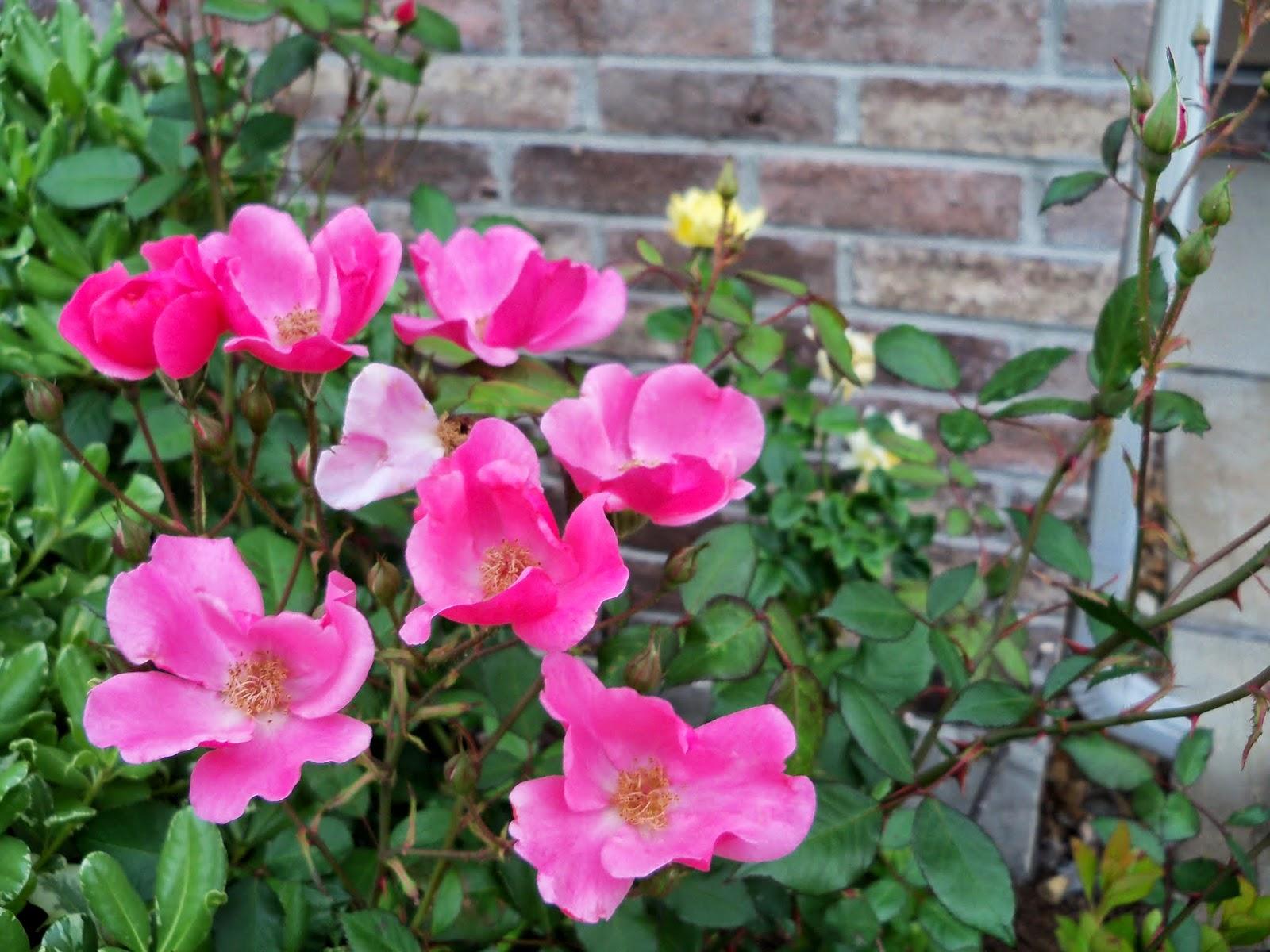 Gardening 2014 - 116_1509.JPG