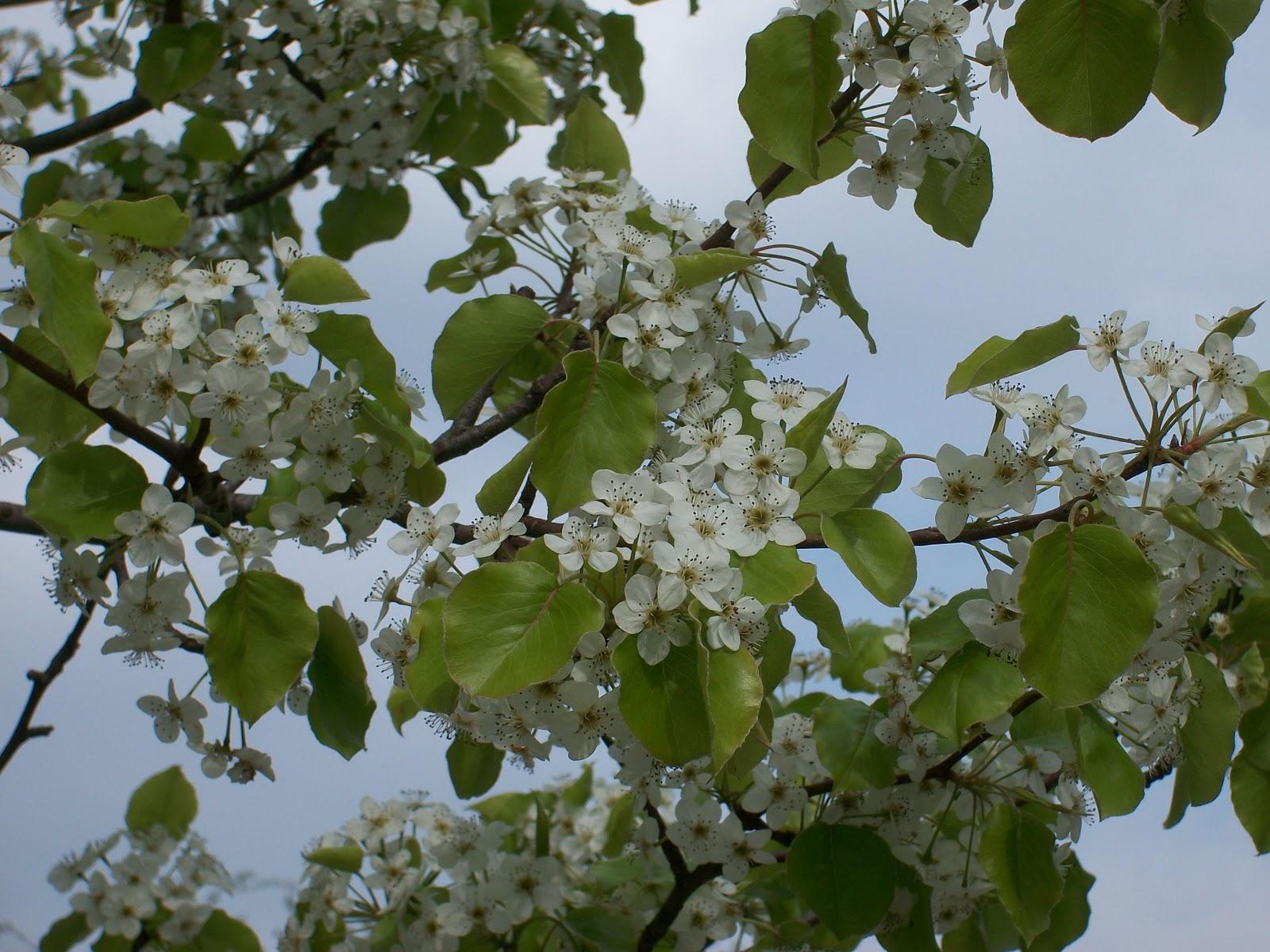Le bruit des pages le jour du printemps - 1er jour du printemps ...