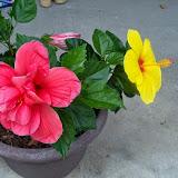 Gardening 2014 - 116_2987.JPG