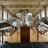 Gallery of Palaeontology and Comparative Anatomy in Paris, Paris - Ile-de-France, France