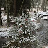 01. Januar 2016: Neujahrswanderung ins Waldnaabtal - IMG_1524.JPG