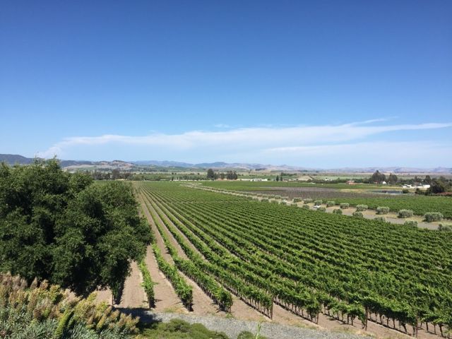 gloria ferrer winery