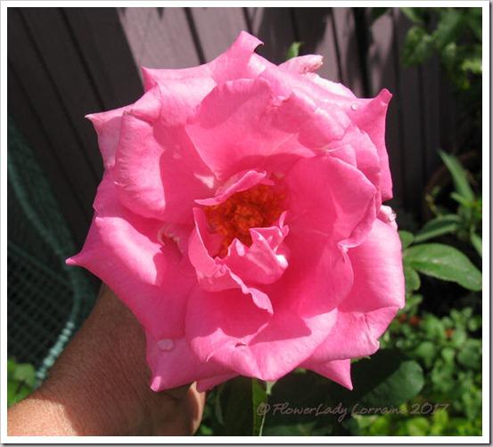 02-28-paul-mc-rose