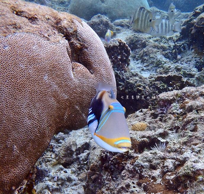 37 沖繩自由行 水上活動 香蕉船 Marine Support TIDE 殘波 藍洞海洋觀光 藍洞浮潛&珊瑚礁 餵食熱帶魚浮潛