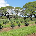 Hawaii pics 33.jpg