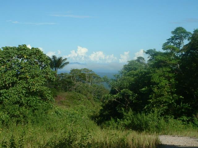 Dans la Cordillera del Condor. Photo : Amazon Insects