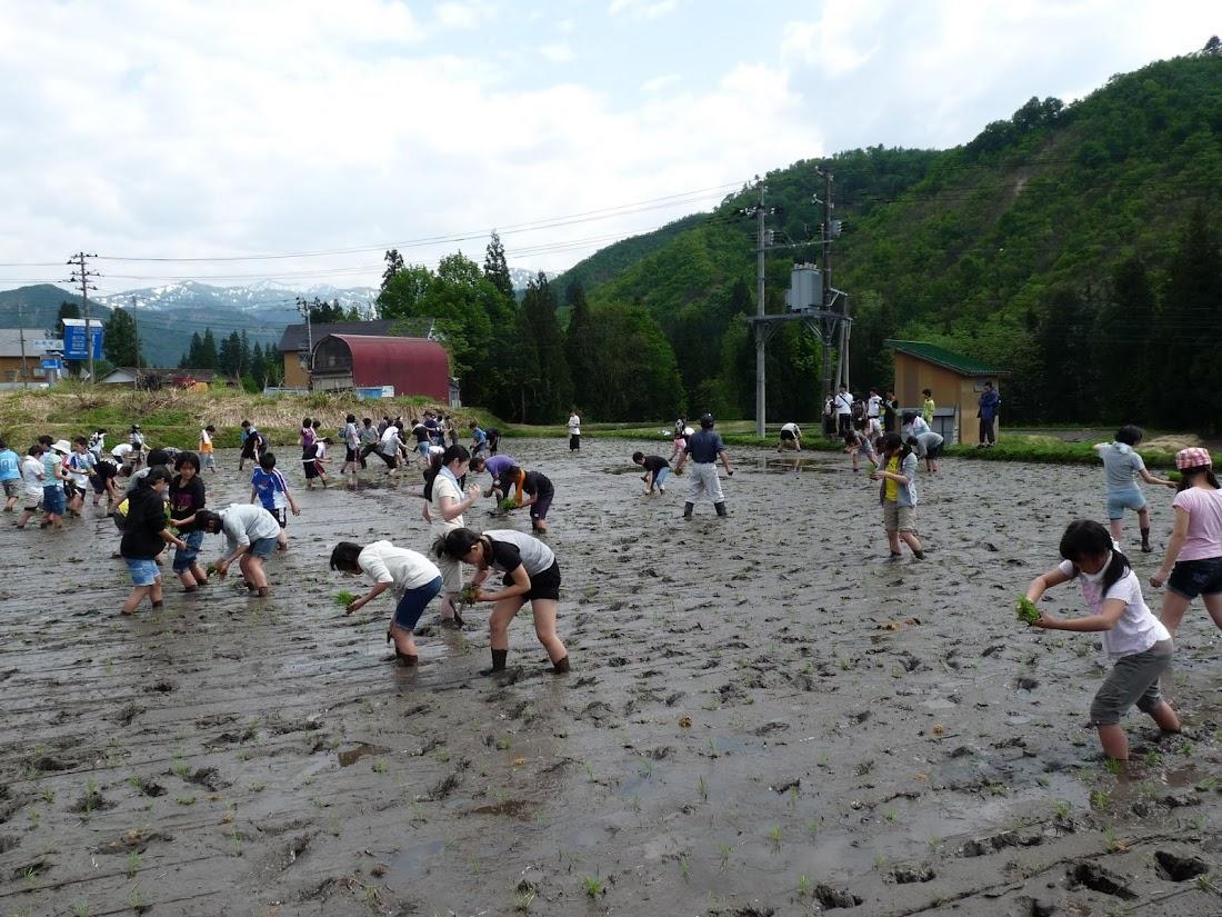 足立区立第八中学校 田植え体験
