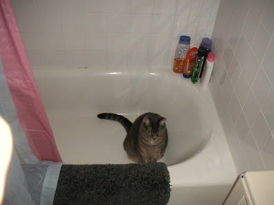 Why, yes, it is a cat in the bathtub...