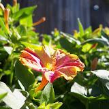 Gardening 2012 - 115_1543.JPG