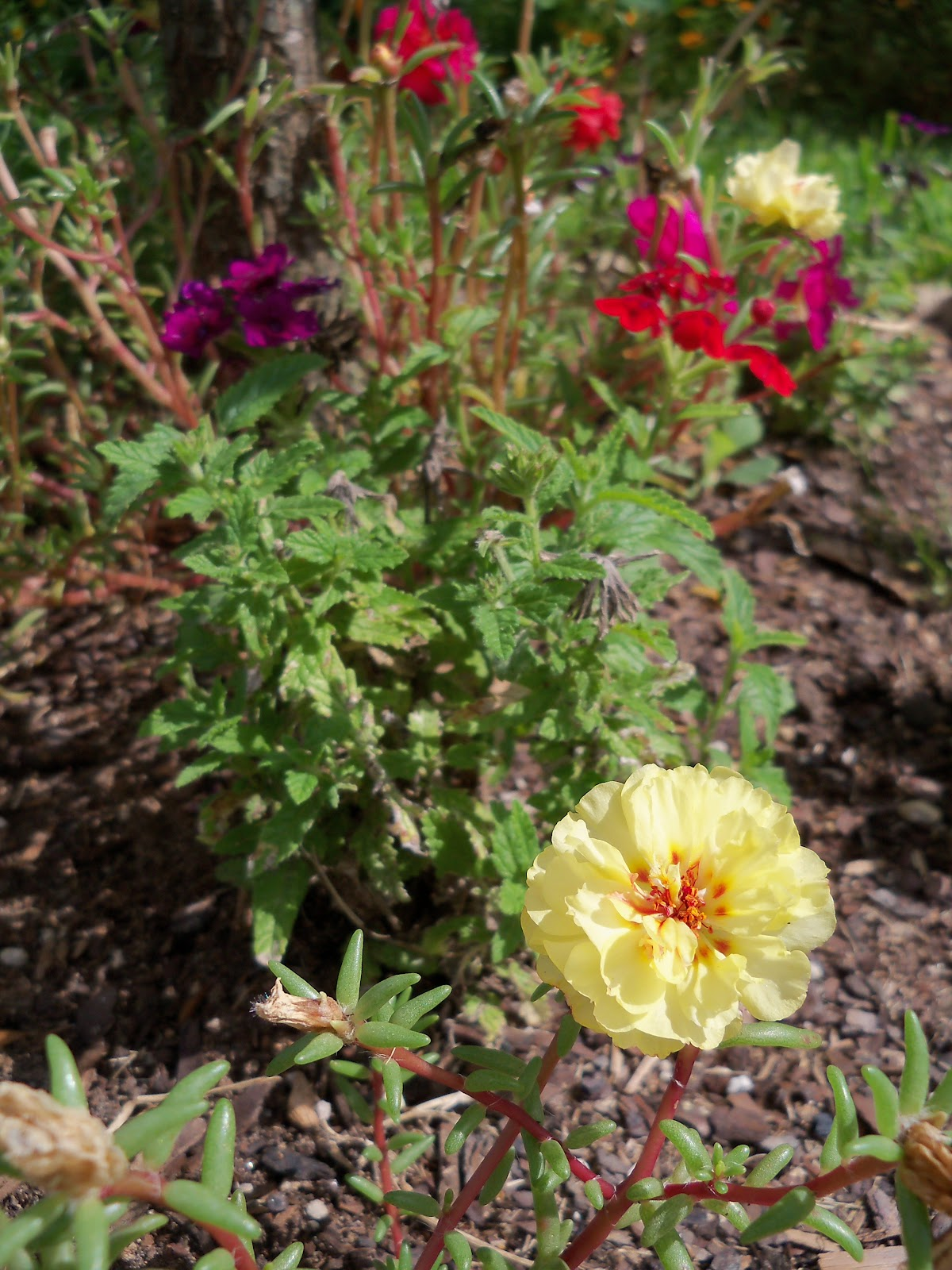 Gardening 2010, Part Three - 101_5050.JPG