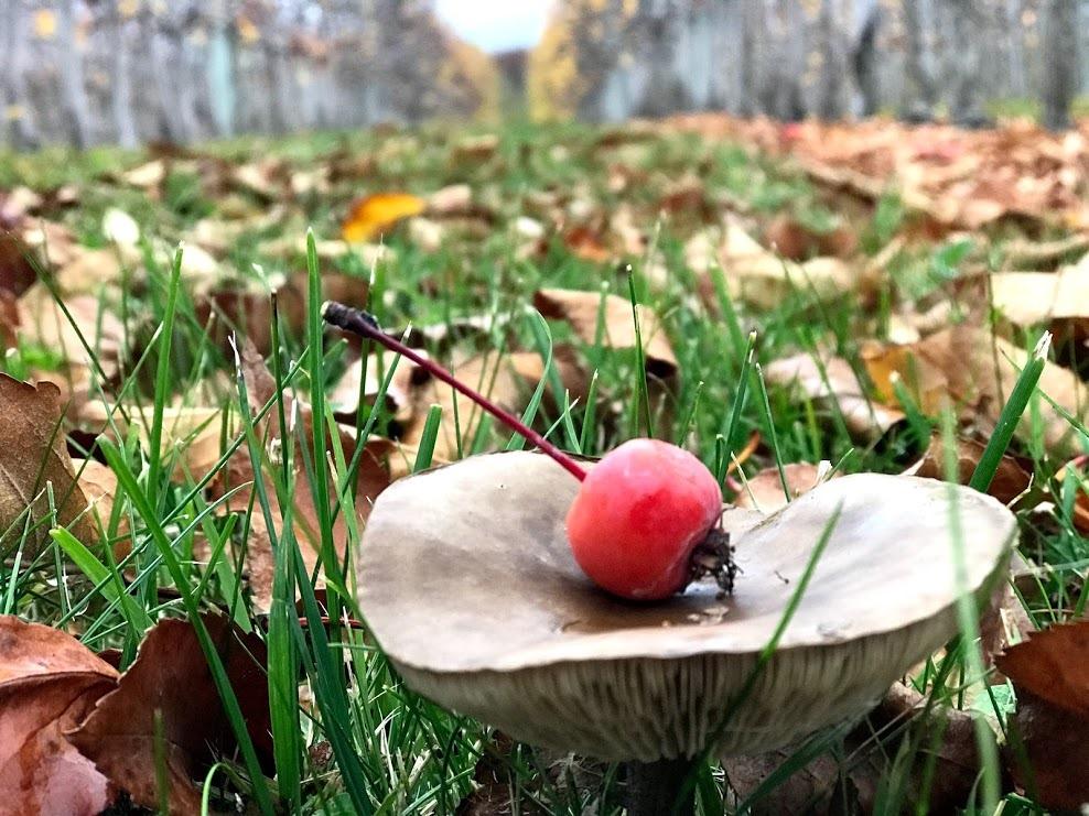 [Mushroom+with+Crab+Apple%5B5%5D]