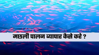 मछली पालन का व्यापार कैसे शुरू 2021 | How To Start Fish Farming In Hindi