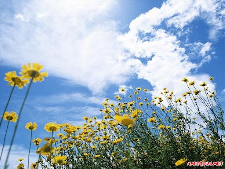 Tuyển chọn hình ảnh cánh đồng hoa đẹp lãng mạn nên thơ thắm tươi nhất thế giới