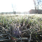 Samantha_Navarro-Frosty_Missouri_Morning.jpg