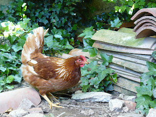 french village diaries chickens France summer visitors