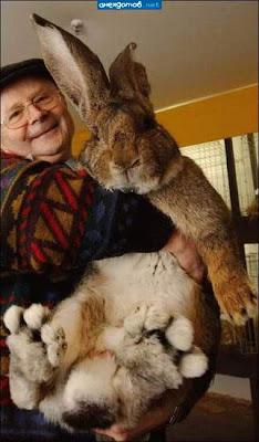 Кони и зайцы