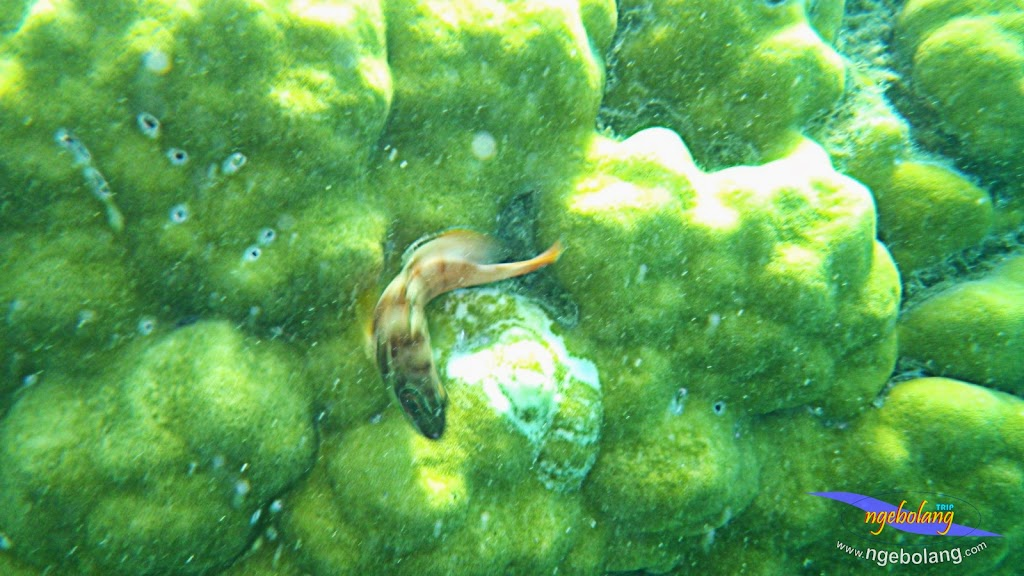 pulau pari 27-28 september 2014 pen 20