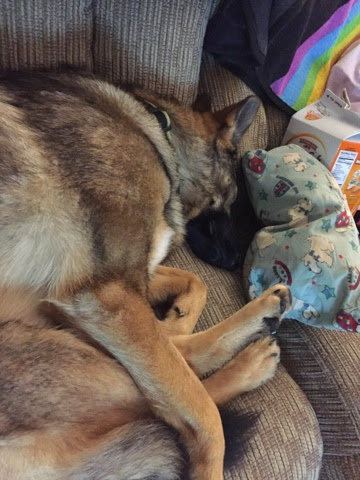 Napping German Shepherd Dog