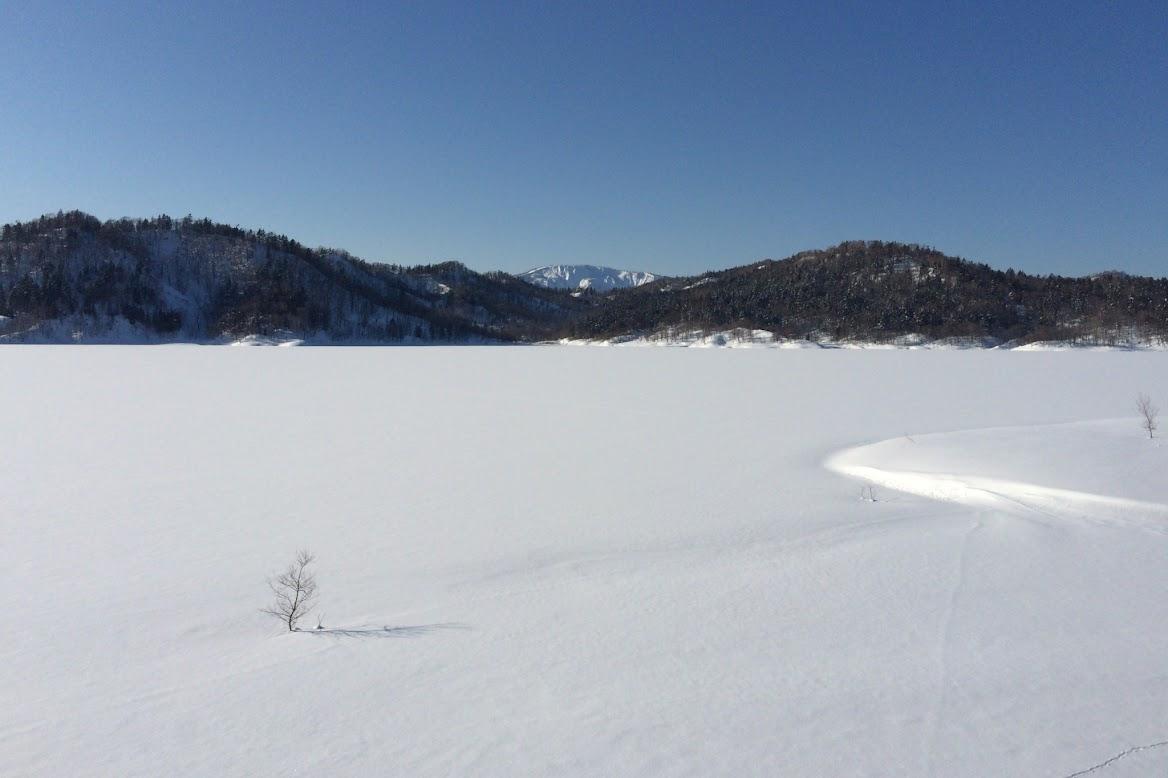 ホロピリ湖の雪野原に佇む小さな木