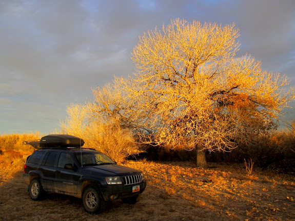 Jeep and cottonwood