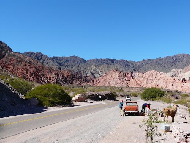 Roadside Llama stand