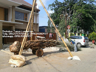 jual pohon kurma, pohon kurma, pohon kurma murah, pohon Korma berbuah, jual pohon kurma murah