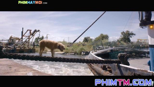 Xem Phim Chú Chó Benji - Benji - phimtm.com - Ảnh 1