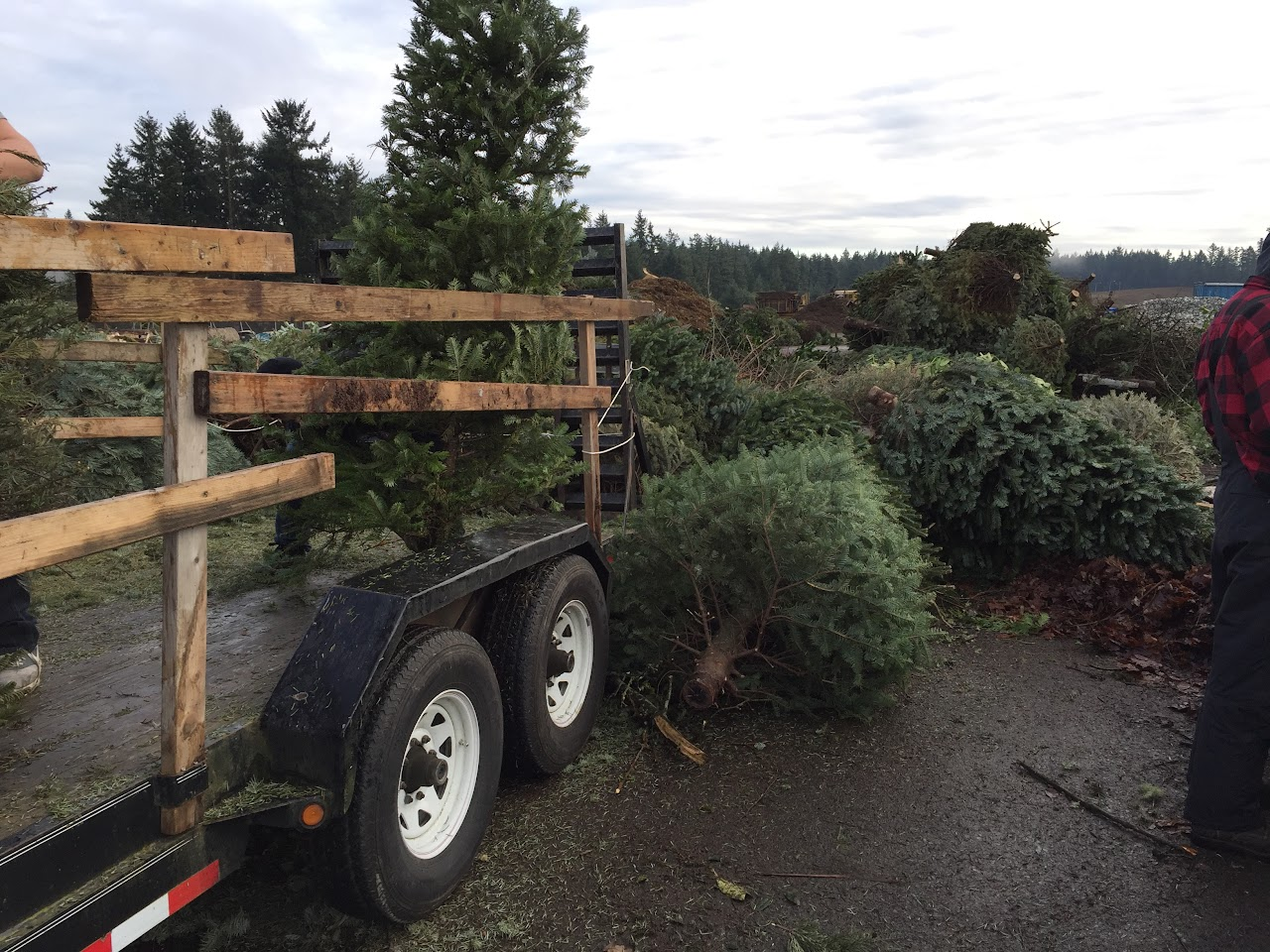Christmas Tree Pickup - January 2016 - IMG_5734.JPG