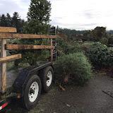 Christmas Tree Pickup - January 2016 - IMG_5734.JPG