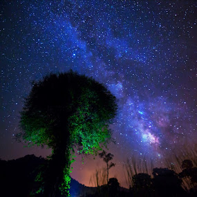 Beyond Fantasy by Cheah Nz - Landscapes Starscapes ( sky, cheah, forest, nz, milky way )