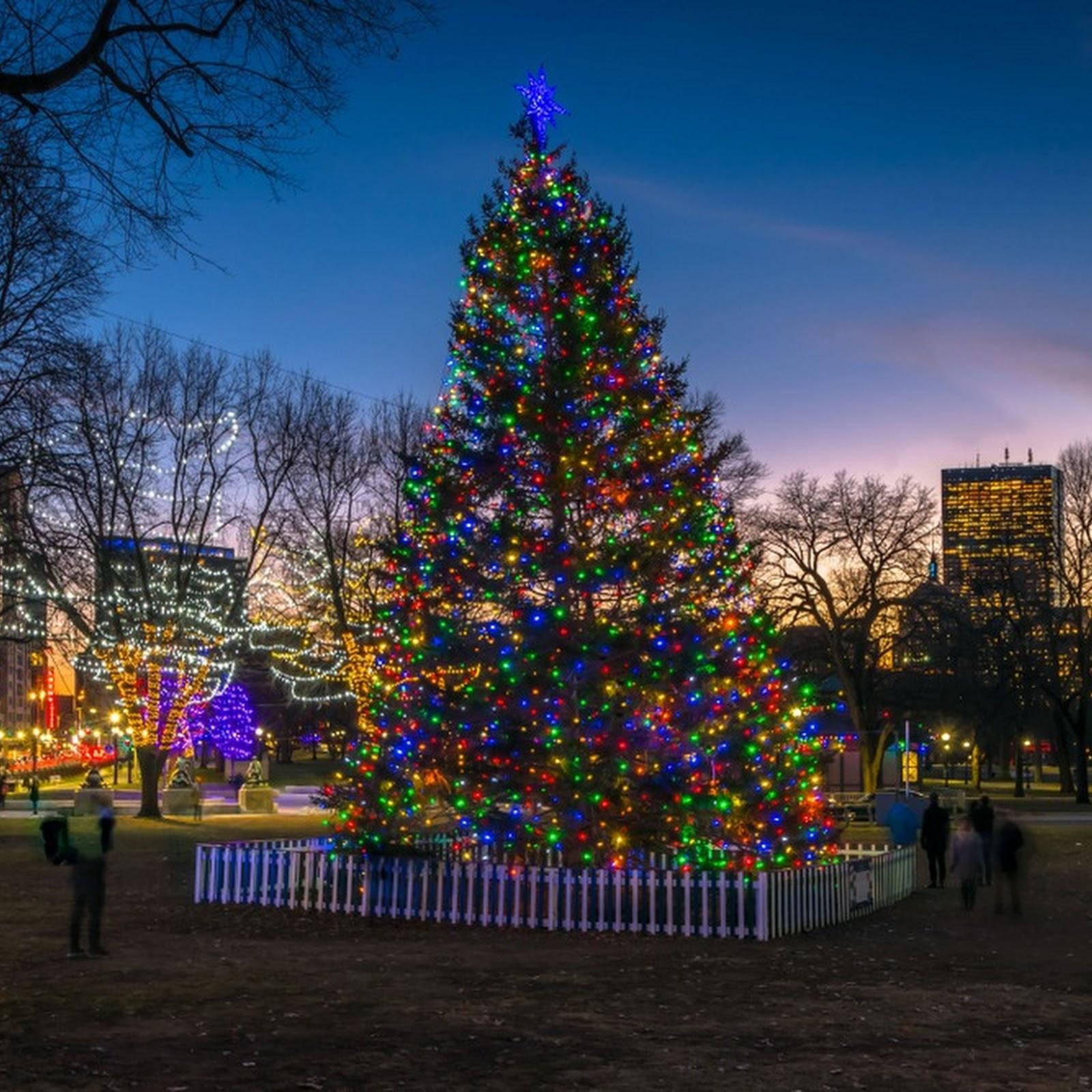 Nova Scotia's Christmas Gift to Boston