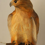 red tail hawk 005edit.jpg