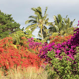 Hawaii Day 6 - 114_1749.JPG