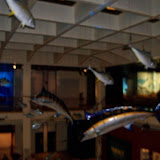 Houston Museum of Natural Science - 116_2783.JPG