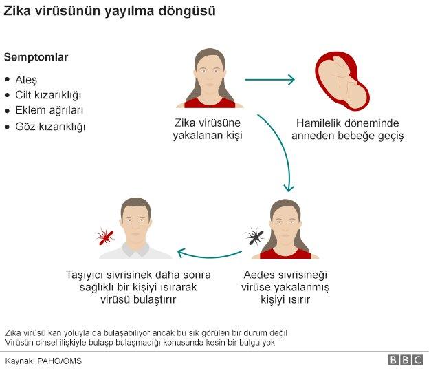 zika virüsü yayılma döngüsü
