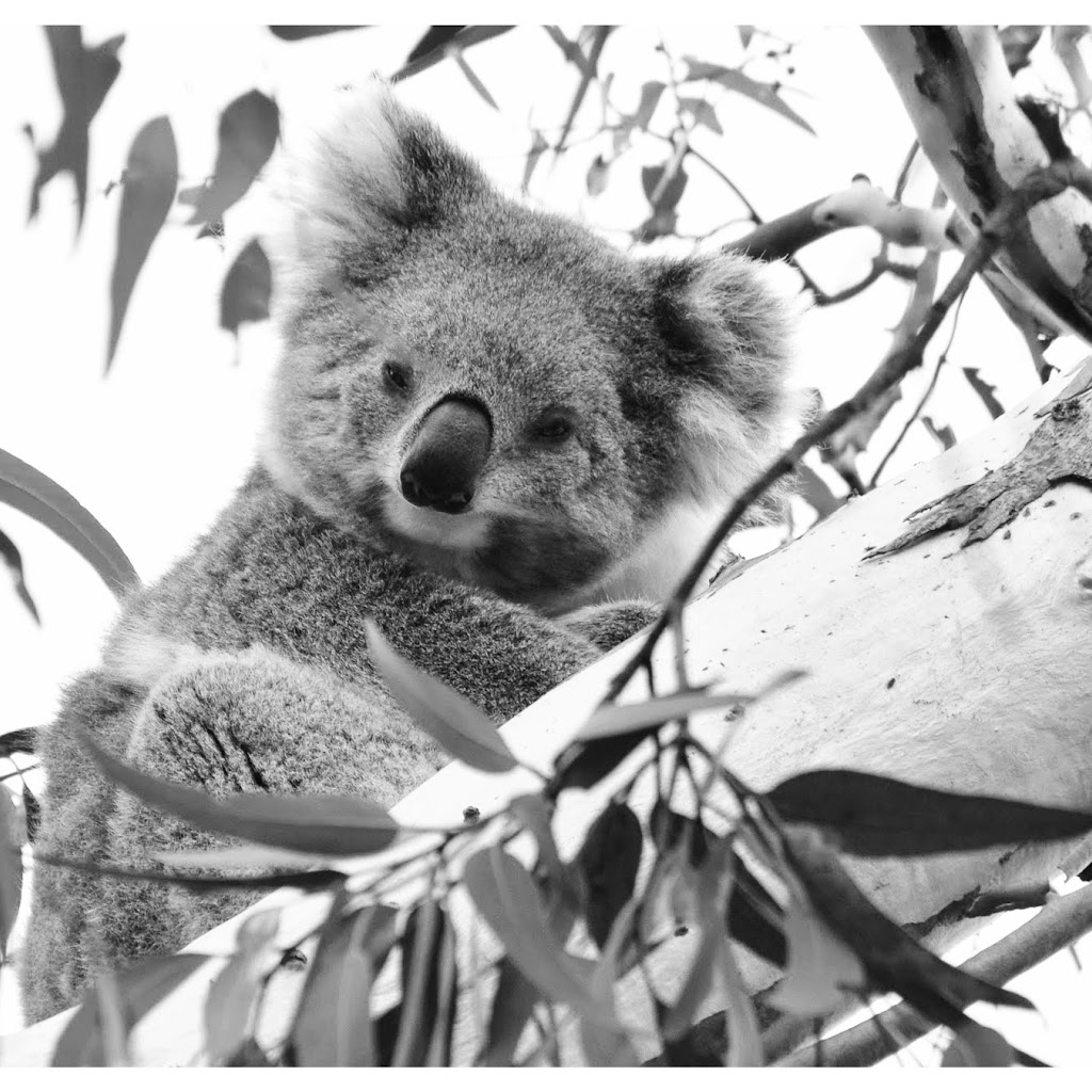 Family Album - The Smoky Dynasty (Koala Clancy's family)