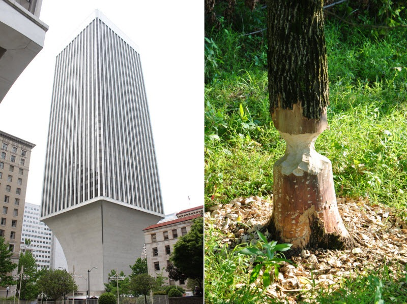 rainer-tower