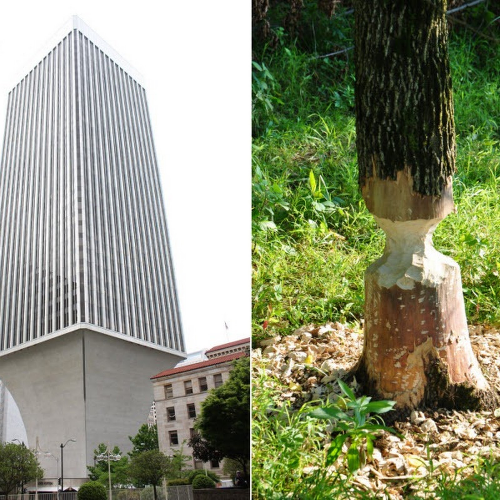Rainier Tower, or The Beaver Building