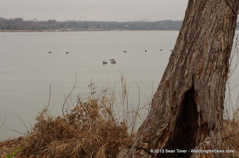 01-26-13 White Rock Lake - IMGP4349.JPG